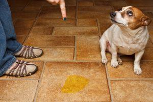 Imagem de cachorro levando bronca do dono