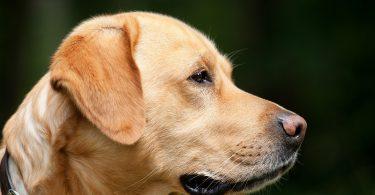 Imagem de cachorro de pele clara