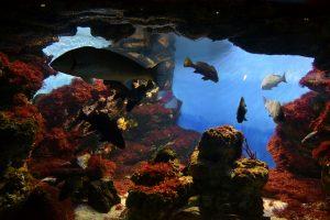 Conheça o Aquàrium Barcelona