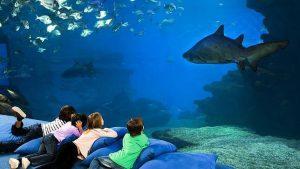 Dormir com os tubarões no Aquàrium Barcelona