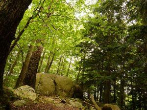 Imagem de um dos trechos do Parc Natural del Montseny