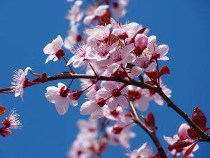 Imagem de flores de tom rosado