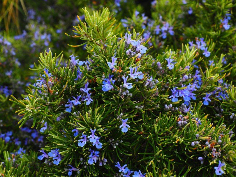 Imagem de flores e arbusto