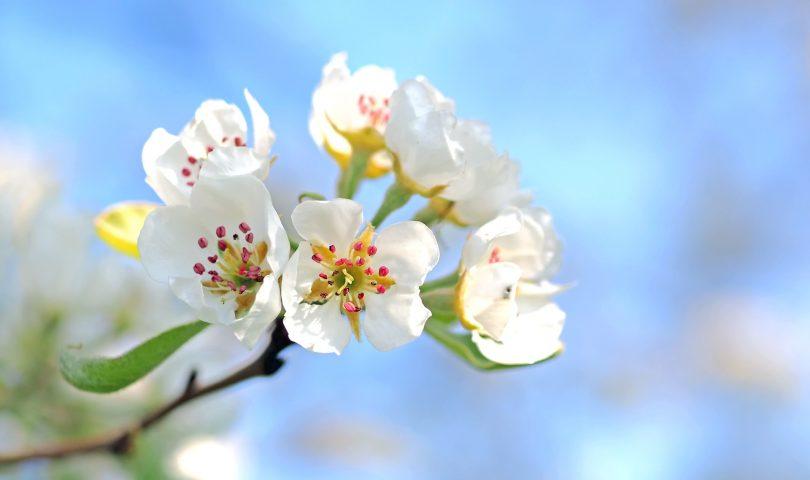 Imagem de flores com pétalas brancas