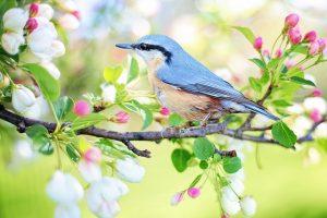 Imagem de um passarinho sobre galho