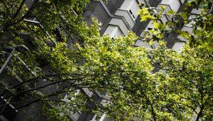 As árvores em Barcelona que mais alergia dão - pólen