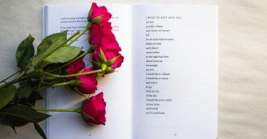 Imagem de uma rosa e um livro aberto simbolizando Sant Jordi