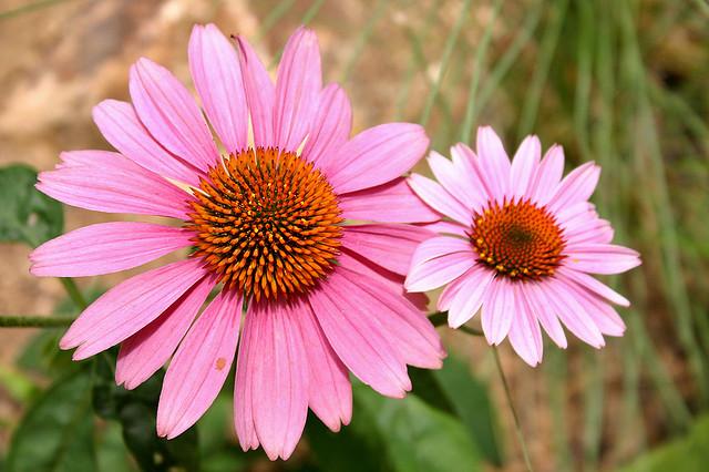 flores no jardim o ano inteiro:Jardín Botánico está aberto o ano inteiro, o que significa que